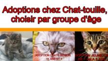 Adoptions Chez Chat-touille